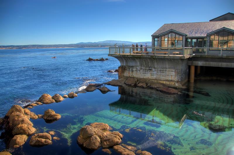 Monterey_MBAGreatTidepool_daSilvaMBA